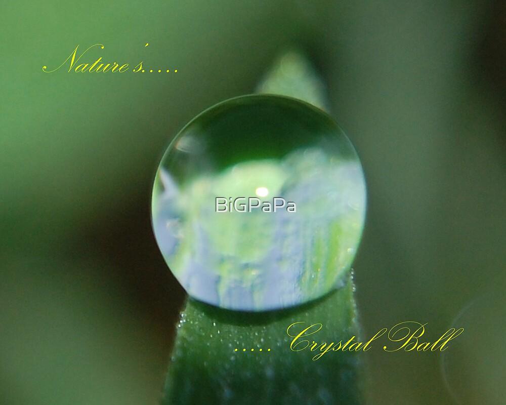 Nature's Crystal Ball........... by BiGPaPa