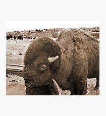 Buffalo Bill Photographic Print