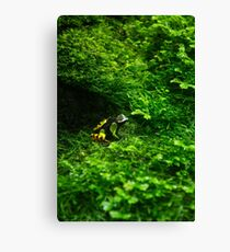 Colorful Frog Canvas Print