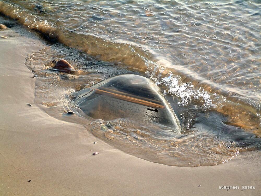 searock by stephen  jones