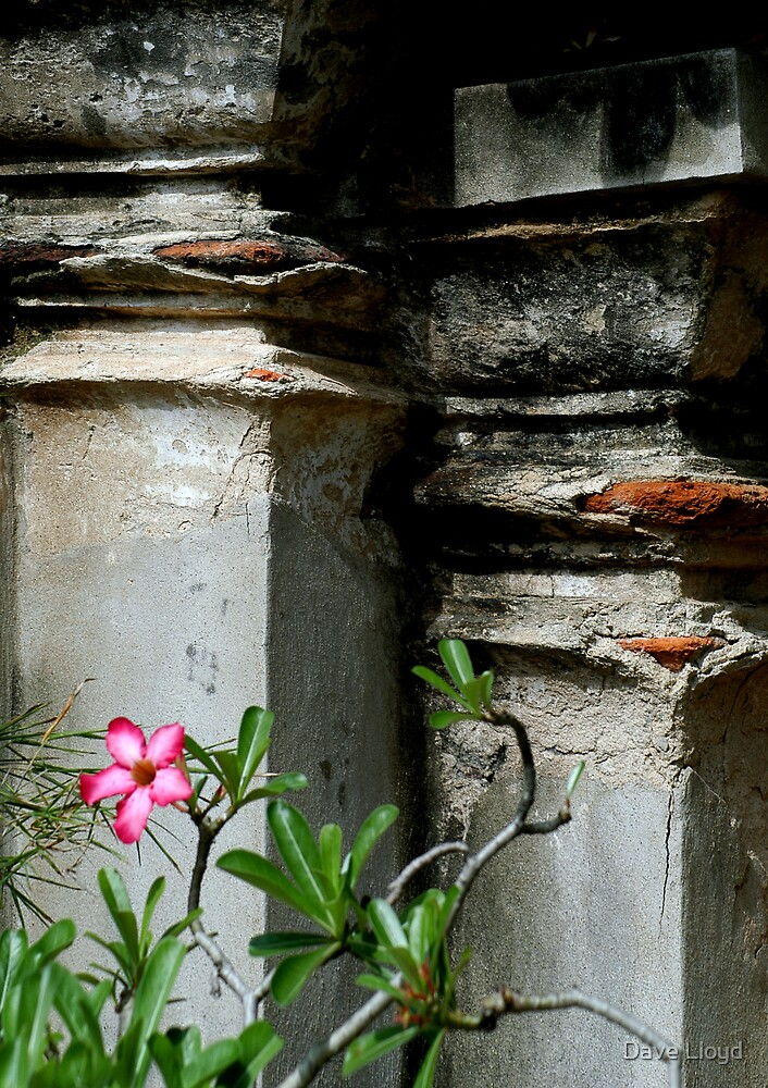 Flower And Ruins by Dave Lloyd
