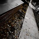 Autumn 4 by stevesimages