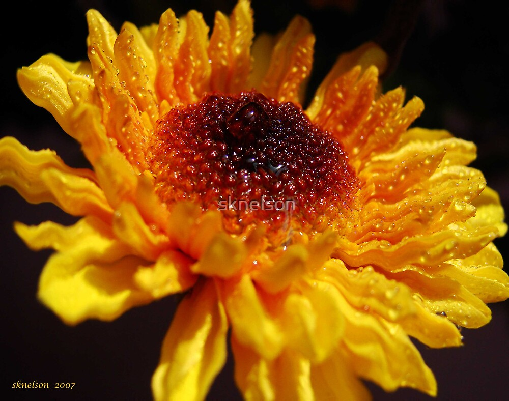 Golden Ripples by sknelson