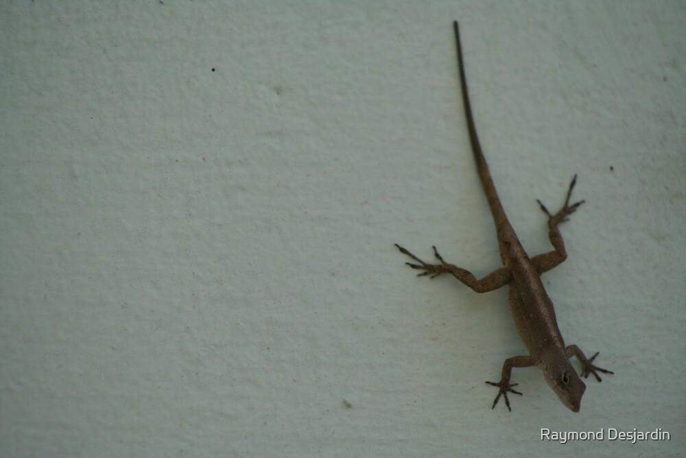 little lizard by Raymond Desjardin