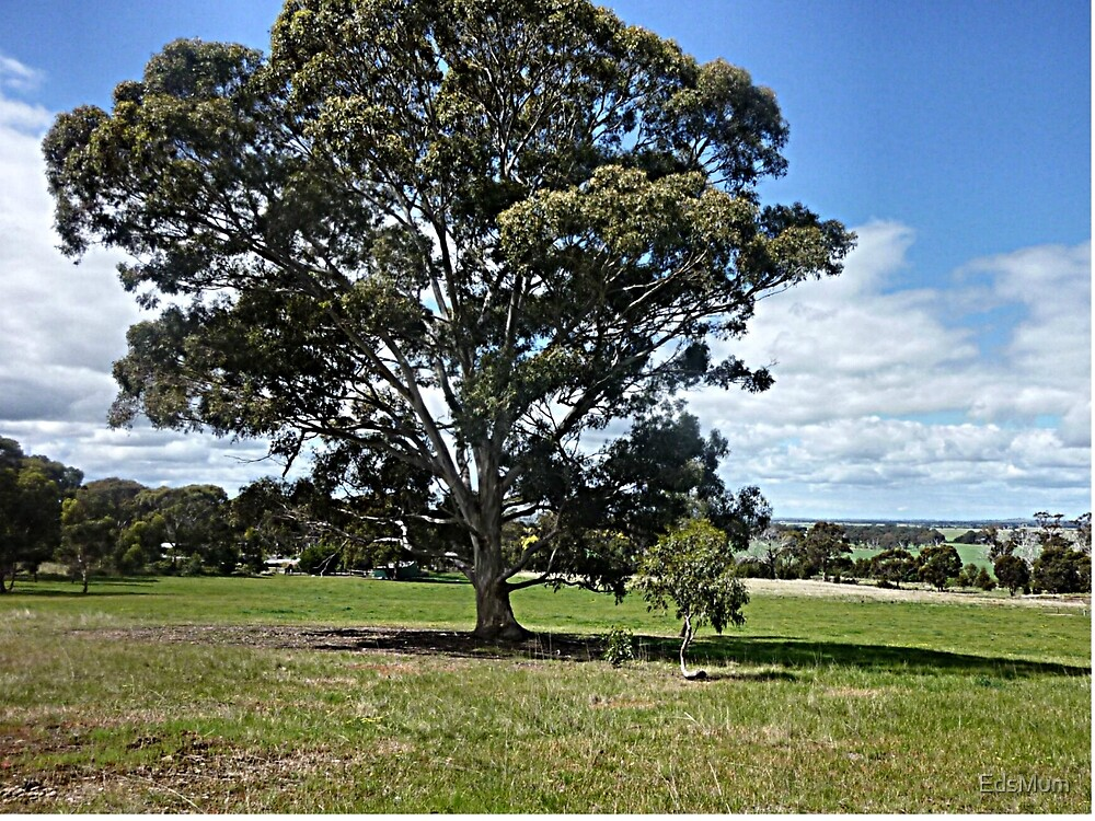 Stately tree - Anakie, Vic. by EdsMum