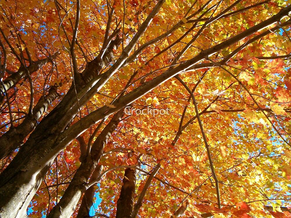 Autumn Splendor by Crockpot