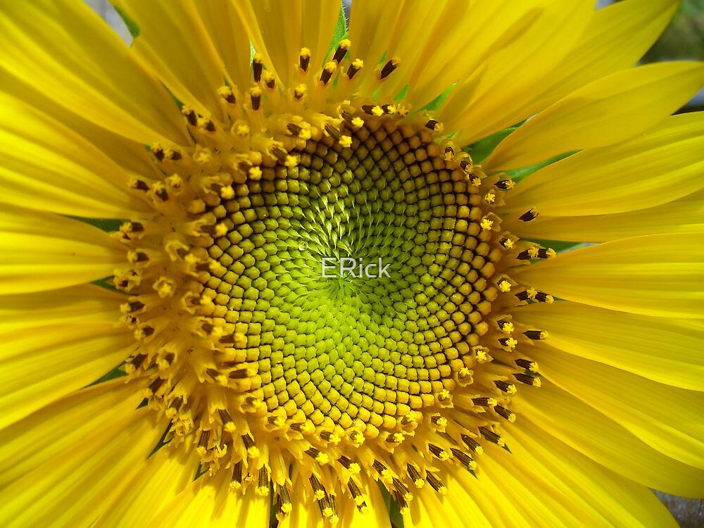 Sunflower Love by ERick
