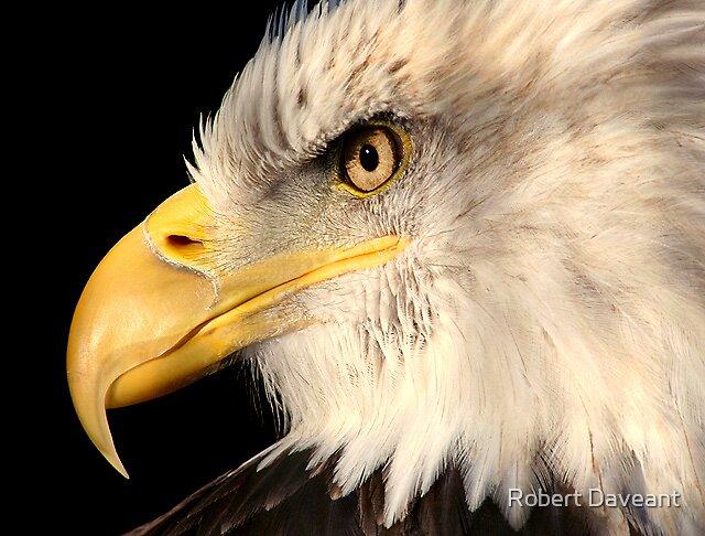 Eagle Portrait #1 by Robert Daveant