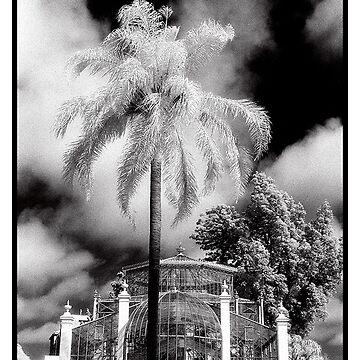 Adelaide Botanic Gardens (circa 1999) by primus