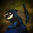 Blue Fancy by lwaltrip