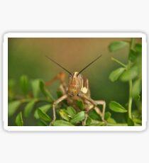 Grasshopper Tree Topper... Sticker