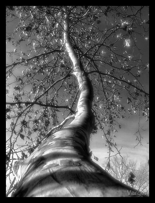 A Kind of Magic Tree... by Vargen
