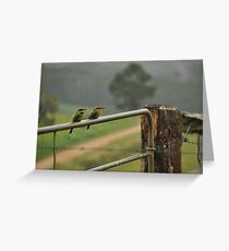Bee-eater Gatekeeper... Greeting Card