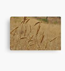 Grass Lands... Canvas Print