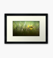 Splendour in the grass... Framed Print