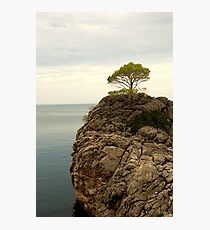 Credence Clear Water Survival Photographic Print
