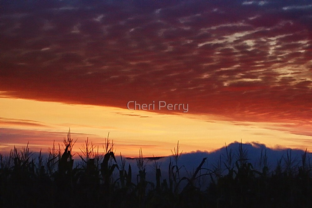A Cornfield Sunrise by Cheri Perry
