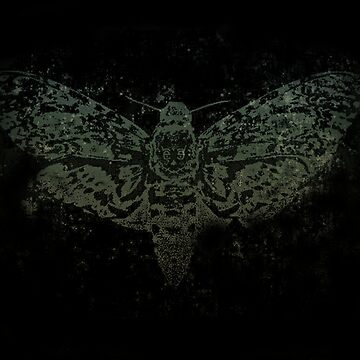 Untitled - Death's-Head Hawkmoth by TheLomes