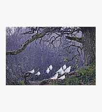 Edge of the Forest Photographic Print