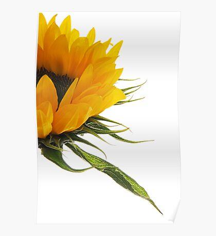Half a Sunflower Poster