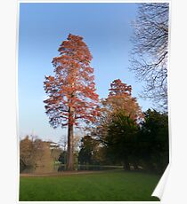 Tree in the late afternoon sun Poster
