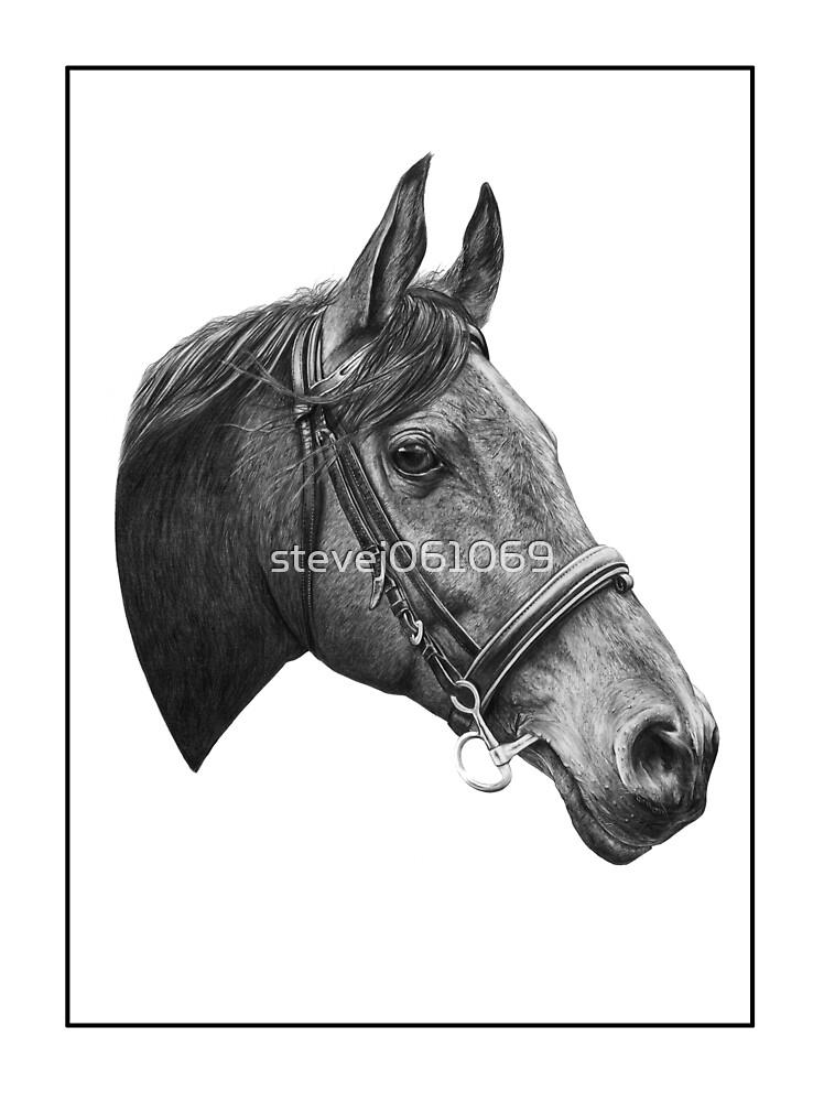 Horse by stevej061069