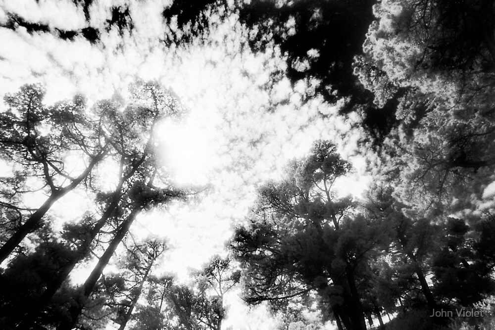 Trees and Sky by John Violet