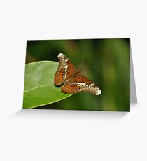 Butterfly Beauty... Greeting Card
