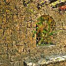 Coral Rock Wall by photorolandi