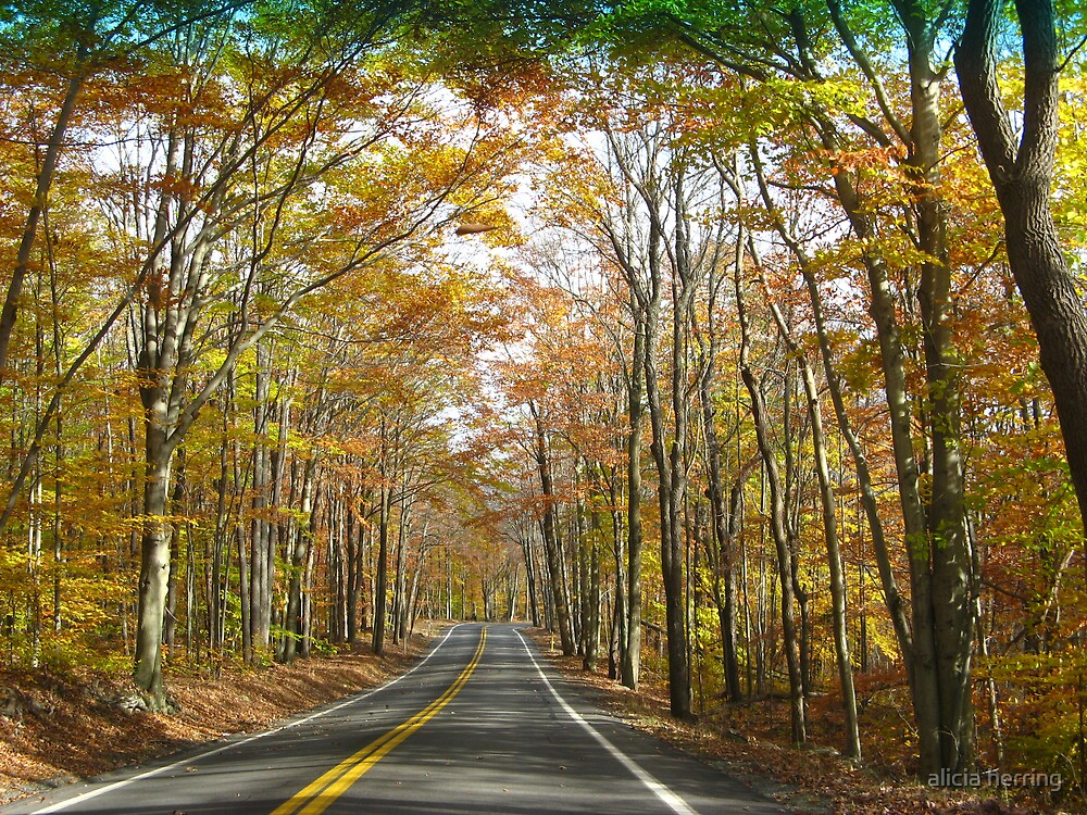 Driving Through The Trees by alicia herring