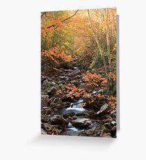 Nature's Splendor  Greeting Card