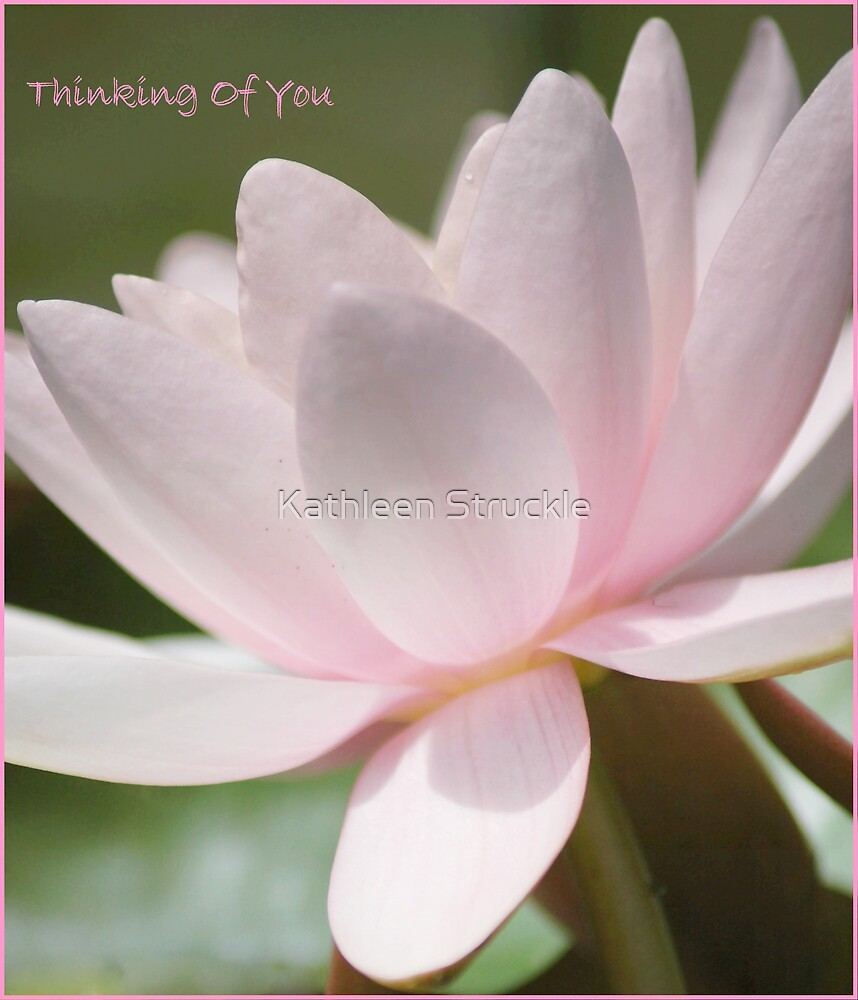 Water Lilly by Kathleen Struckle
