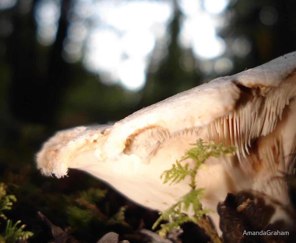Brown mushroom  by AmandaGraham