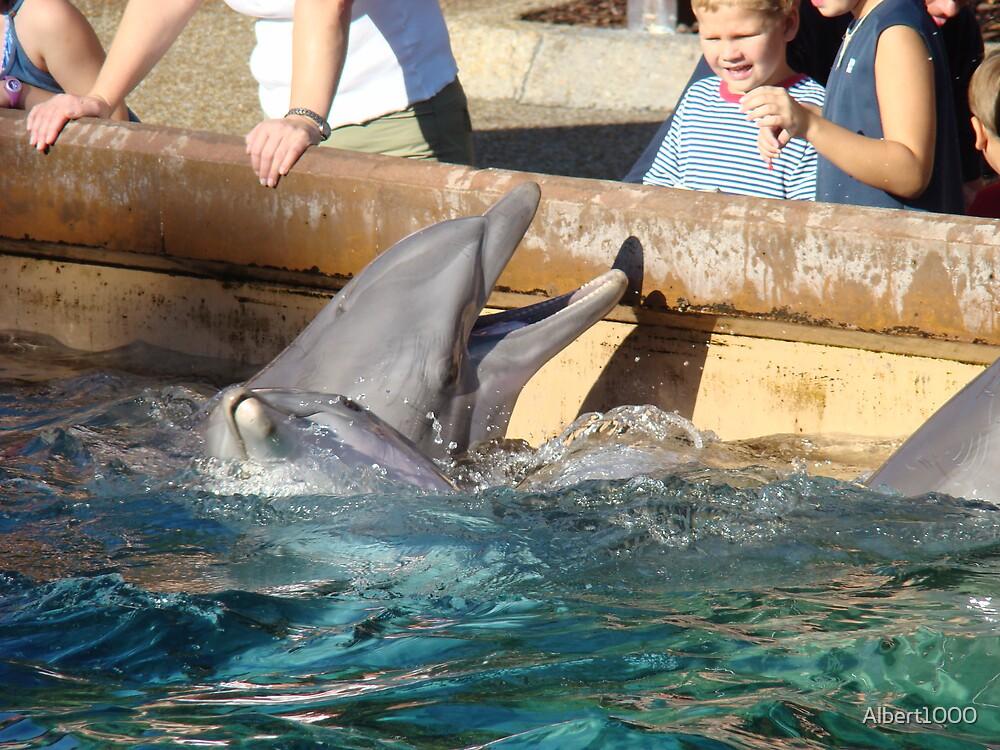 Dolphin by Albert1000