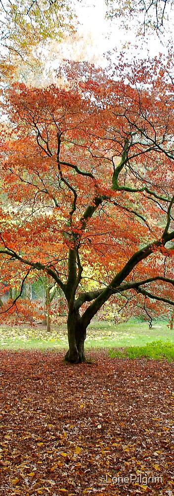 Orange Tree by LonePilgrim