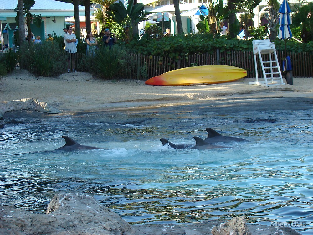 Dolphins by Albert1000