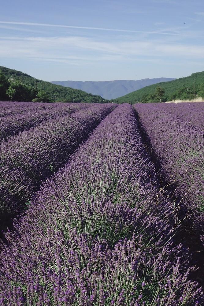Lavender by Christa Moreau