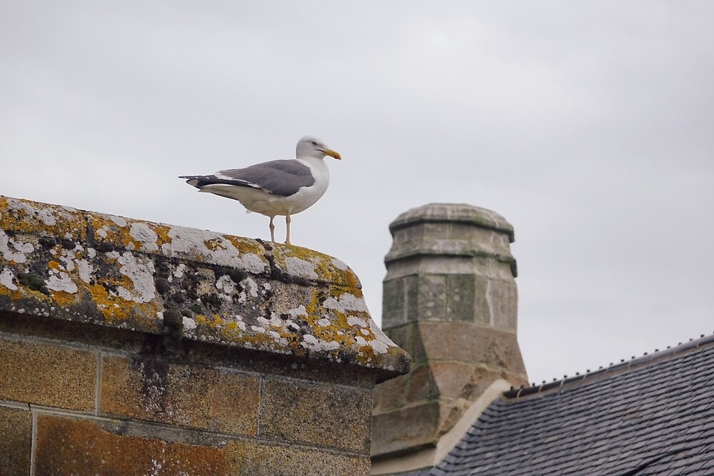 Seagull by Christa Moreau