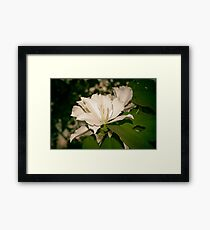 silky white... Framed Print