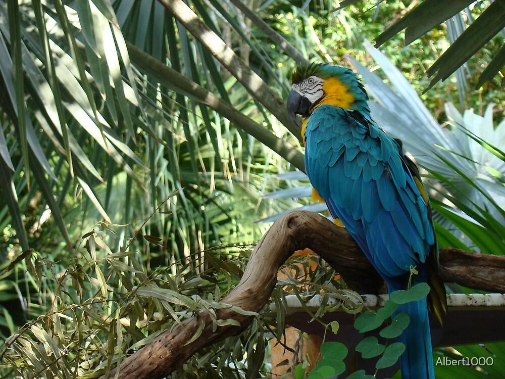 Parrot by Albert1000