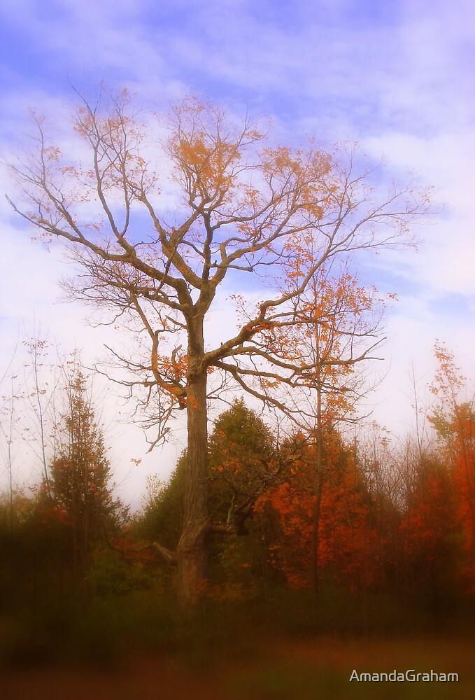 Orange tree by AmandaGraham