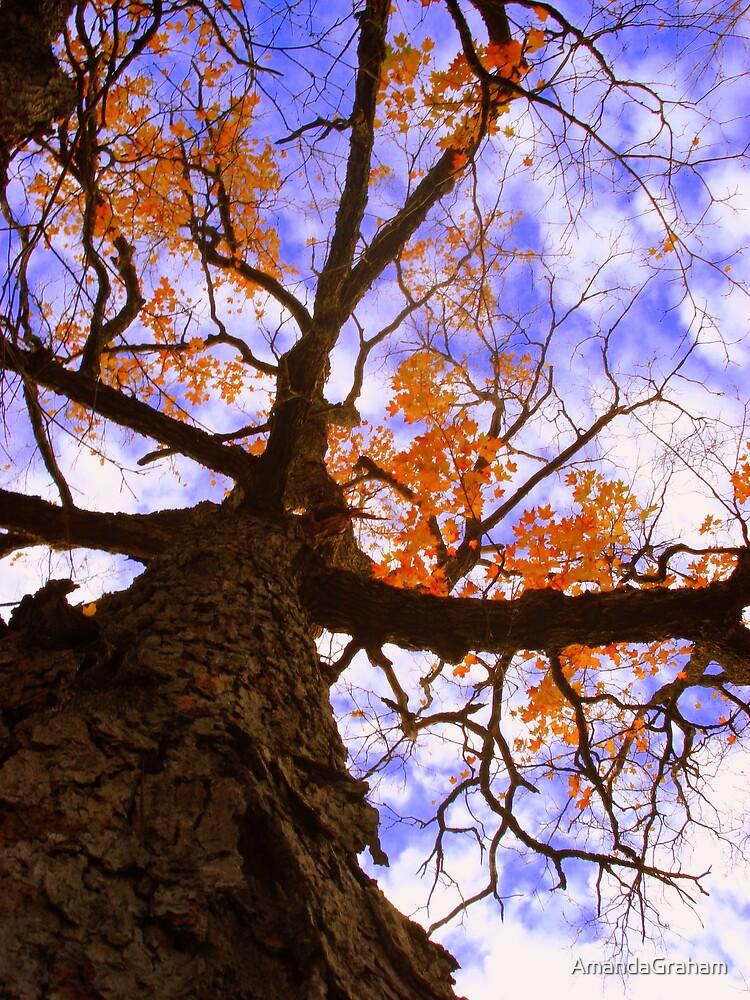 Up a tree by AmandaGraham