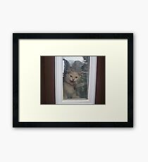 Noodle Unhappy Framed Print