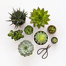 Succulents by Candypop