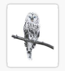 Freedom owl Sticker