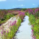 Great Meadows Loosestrife Summer by Owed To Nature