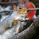 Oh Please,  Let There Be Peanuts. by Linda Karlin