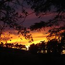 Sunset through trees by Lisa Trainer