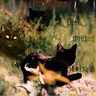 Kitty Kontinuum by cerridwen