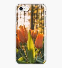 Orange tulips iPhone Case/Skin